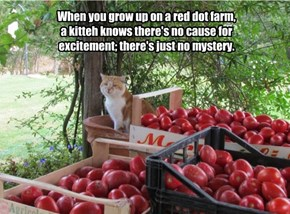 When you grow up on a red dot farm,  a kitteh knows there's no cause for excitement; there's just no mystery.