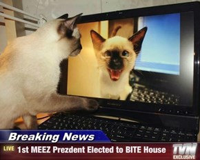 Breaking News - 1st MEEZ Prezdent Elected to BITE House