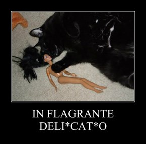 IN FLAGRANTE DELI*CAT*O