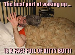 The best part of waking up ...  IS A FACE FULL OF KITTY BUTT!