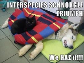 INTERSPECIES SCHNORGLE TRIUMPH  We HAZ it!!!