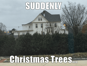 SUDDENLY  Christmas Trees...