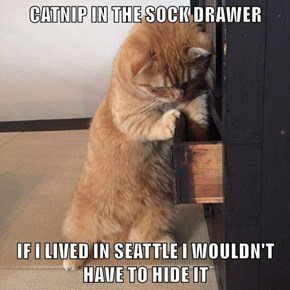 CATNIP IN THE SOCK DRAWER  IF I LIVED IN SEATTLE I WOULDN'T HAVE TO HIDE IT