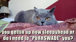 "you gettin up now sleepyhead or do i need to ""PURRSWADE"" you?"