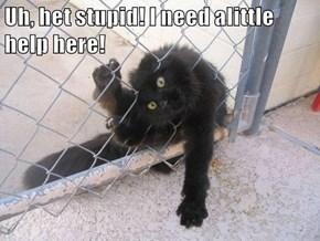 Uh, het stupid! I need alittle help here!
