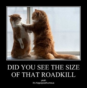 DID YOU SEE THE SIZE OF THAT ROADKILL