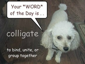 Nugget says, Your *WORD* of the Day is colligate