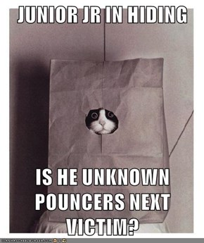 JUNIOR JR IN HIDING  IS HE UNKNOWN POUNCERS NEXT VICTIM?