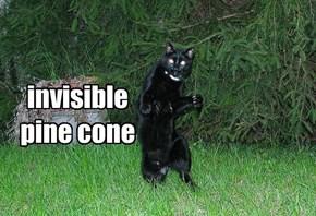 invisible pine cone