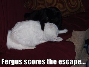 Fergus scores the escape...