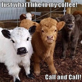 Just what I like in my coffee!  Calf and Calf!