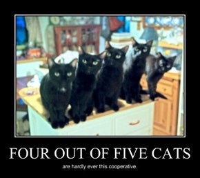FOUR OUT OF FIVE CATS