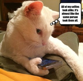 Blonde Cat?