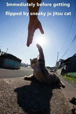 Immediately before getting flipped by sneaky ju jitsu cat