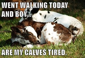 WENT WALKING TODAY                                              AND BOY...  ARE MY CALVES TIRED.