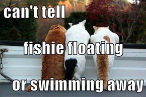 can't tell fishie floating or swimming away