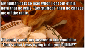 """My human gets so mad when I eat out of his bowl that he yells, """"Get stuffed!"""" then he chases me off the table.  If I could speak, my answer to him would be, """"That's what I was trying to do, you DUMMY!"""""""