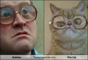 Bubbles Totally Looks Like This Cat