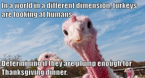 In a world in a different dimension, turkeys are looking at humans  Determining if they are plump enough for Thanksgiving dinner.
