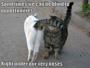 Sometimes we can be blind to opportunities  Right under our very noses.
