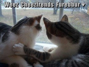 Weez  Cheezfrends  Furebbur ♥