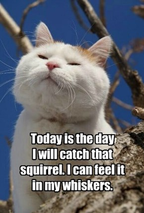 Today is the day  I will catch that squirrel. I can feel it in my whiskers.