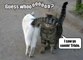 Kittie flirt.