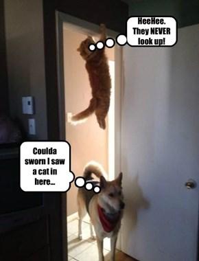 NINJA KITTEH KNOWS ALL THE TRICKS!