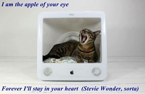 I am the apple of your eye  Forever I'll stay in your heart  (Stevie Wonder, sorta)