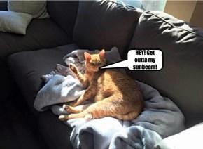 HEY! Get outta my sunbeam!