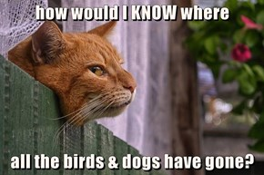 how would I KNOW where  all the birds & dogs have gone?