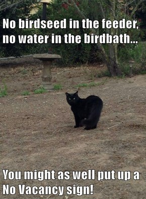 No birdseed in the feeder, no water in the birdbath...  You might as well put up a No Vacancy sign!