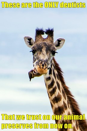 These are the ONLY dentists  That we trust on our animal preserves from now on.