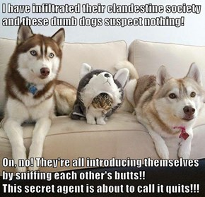 I have infiltrated their clandestine society and these dumb dogs suspect nothing!  On, no! They're all introducing themselves by sniffing each other's butts!!                                                                       This secret agent is about