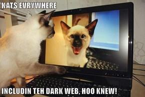 KATS EVRYWHERE  INCLUDIN TEH DARK WEB, HOO KNEW!