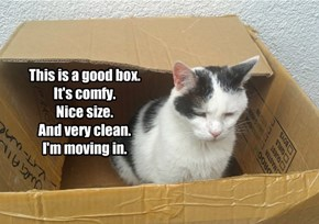 This is a good box. It's comfy. Nice size. And very clean. I'm moving in.