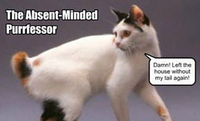 The Absent-Minded Purrfessor.