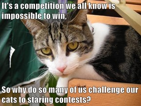 It's a competition we all know is impossible to win,  So why do so many of us challenge our cats to staring contests?
