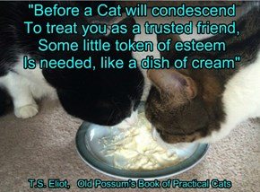 """""""Before a Cat will condescend To treat you as a trusted friend, Some little token of esteem Is needed, like a dish of cream"""""""