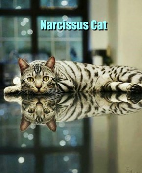 Narcissus Cat