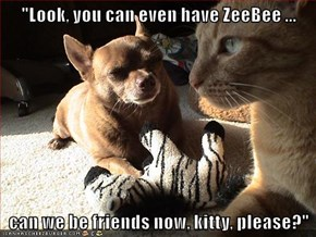 """Look, you can even have ZeeBee ...  can we be friends now, kitty, please?"""