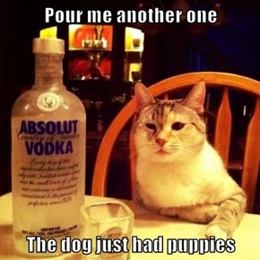 Pour me another one  The dog just had puppies