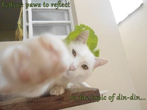 Lettuce pawz to reflect  on the topic of din-din...