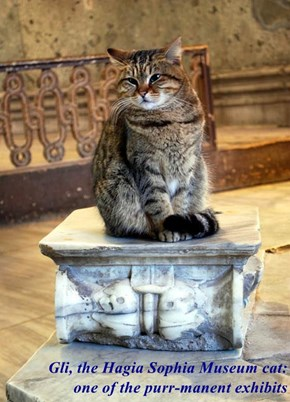 Gli, the Hagia Sophia Museum cat:                            one of the purr-manent exhibits