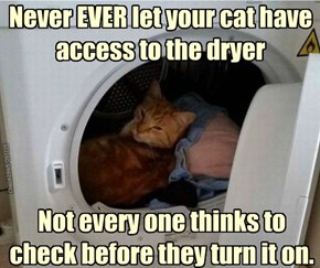 Do you want your child to find a cat after an hour in the dryer?