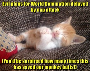 Evil plans for World Domination delayed by nap attack  (You'd be surpirsed how many times this has saved our monkey butts!)