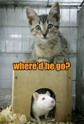 where'd he go?