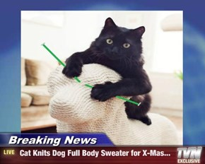Breaking News -  Cat Knits Dog Full Body Sweater for X-Mas...