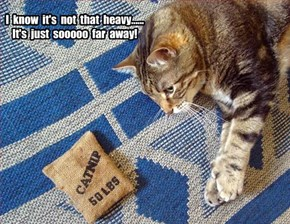 Maybe it's time to lay off the nip!