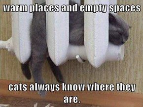 warm places and empty spaces  cats always know where they are.